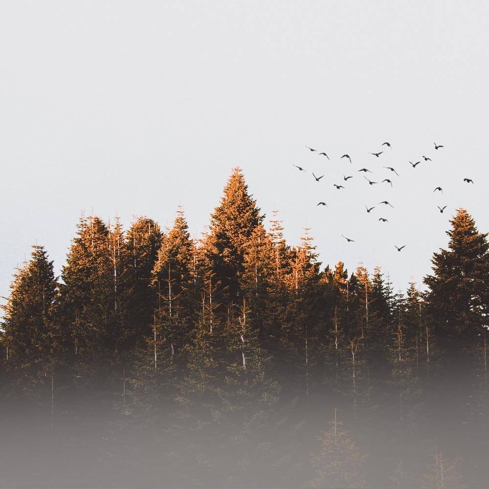 POA-transformational-breath-autumn